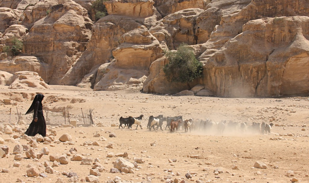 Goat herder in Petra, rock formations