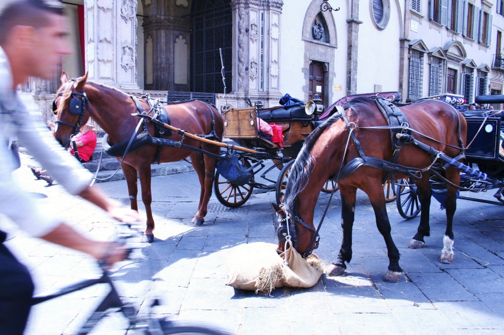 Florence, horses, Italy