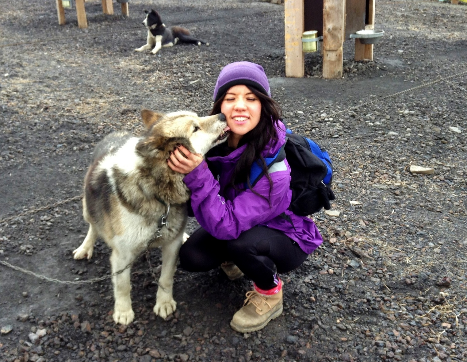 Kiss from a husky dog