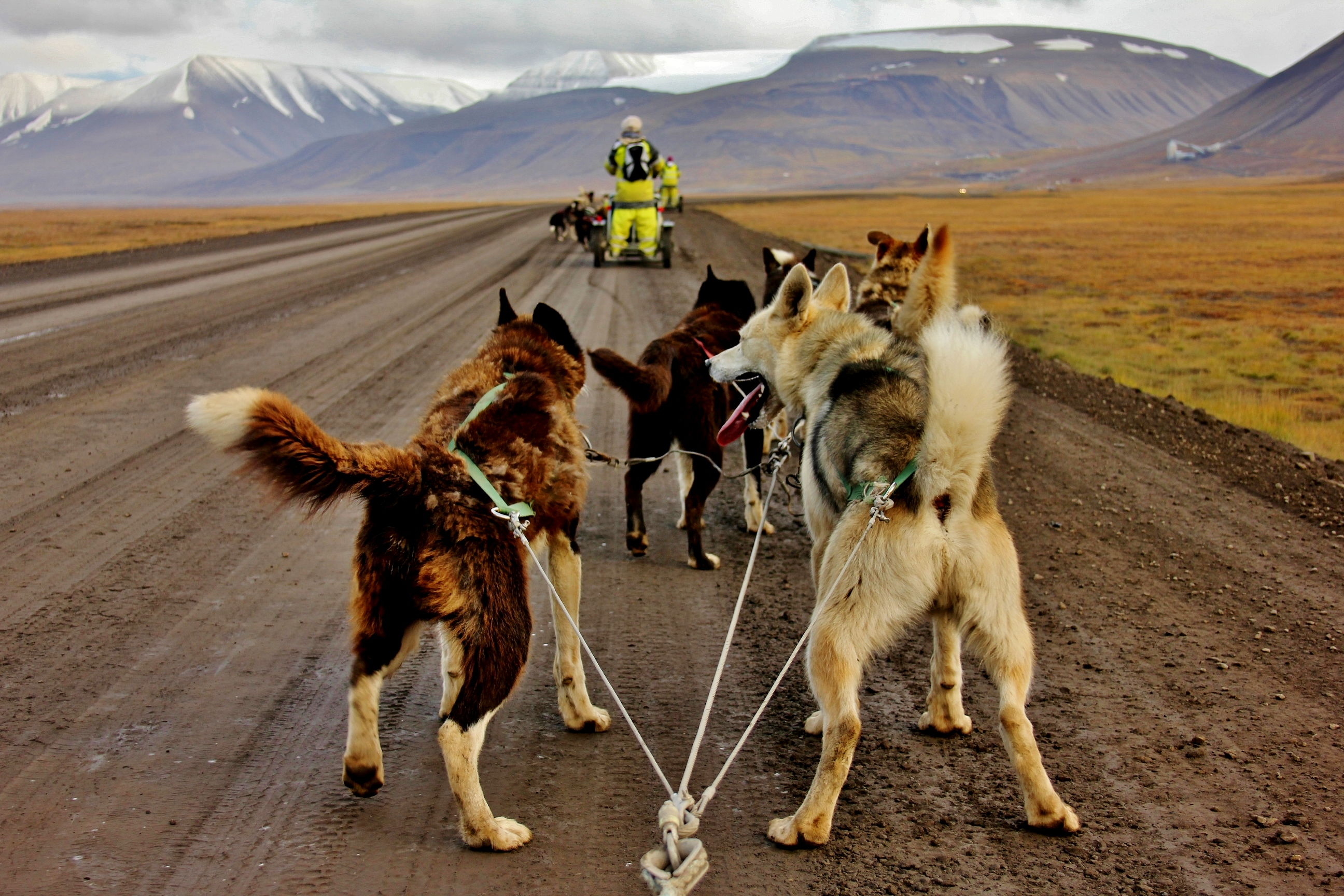 Husky dog sledding in Arctic Norway
