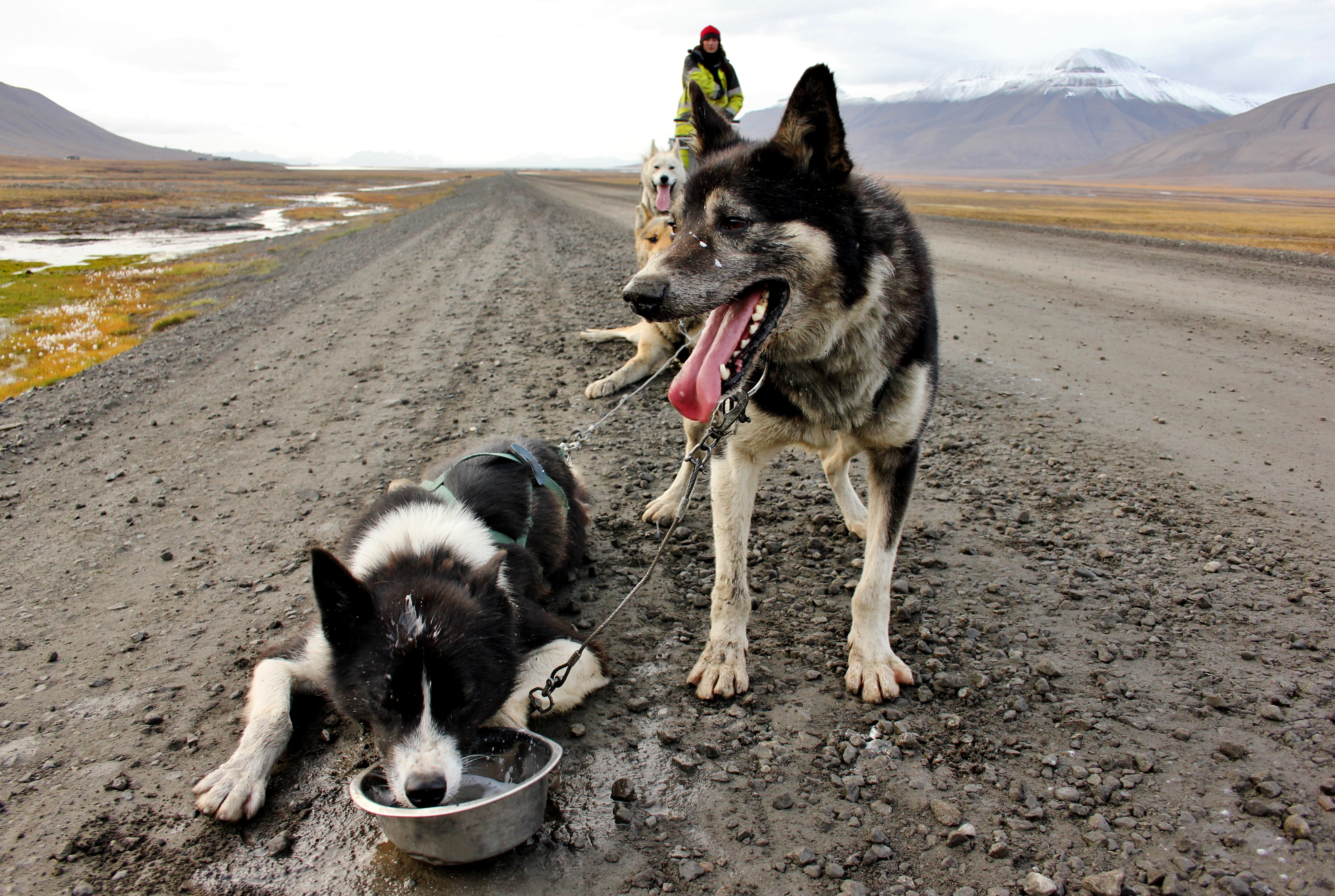 Husky dog sledding in Spitsbergen, Norway