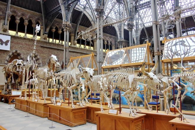 Oxford, Natural History Museum