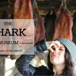 Shark Museum in Iceland