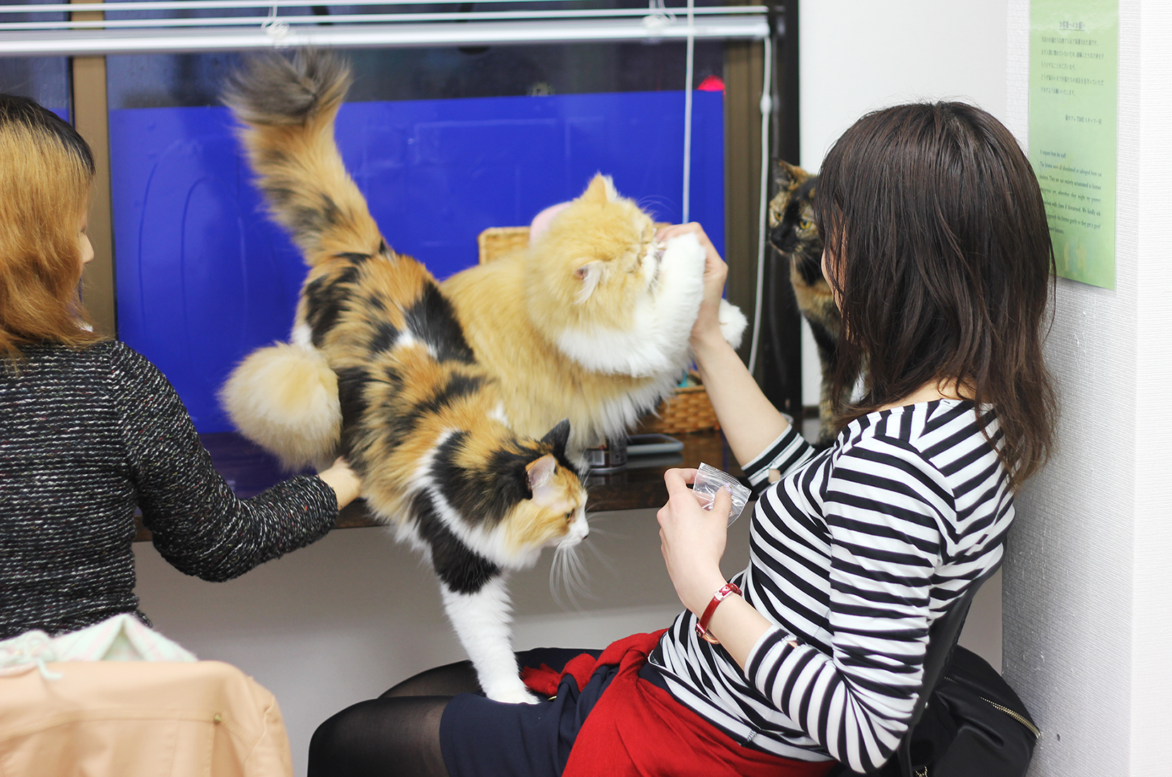 Cat cafe, Kyoto