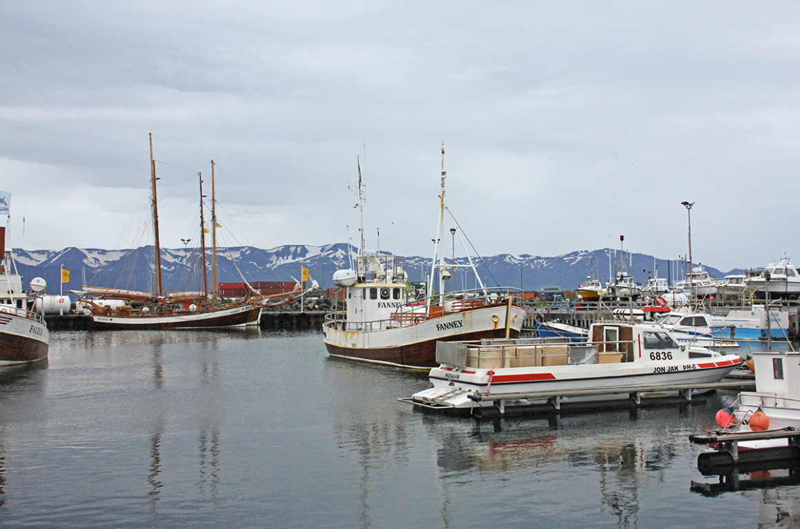 Head to Husavik for whale watching in North Icelandic seas.