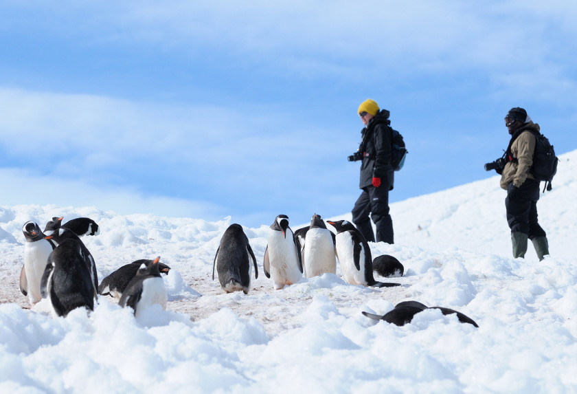 Penguins in the Antarctic Peninsula with South Shetlands, Plancius: Danco Island