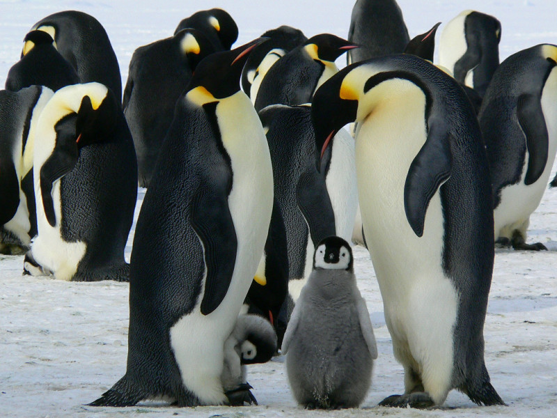 Where can you see penguins around the world? You're guaranteed in Antarctica to see this cute and fluffy creatures!