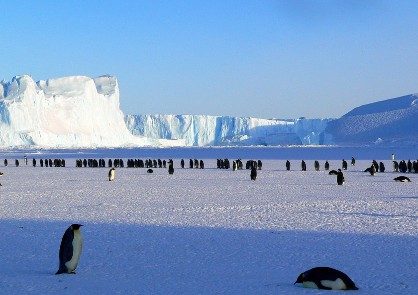 Seeing penguins in Antartica and around the world