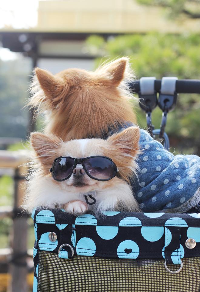 Doggy Stil
